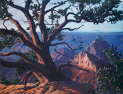 North Rim Tree #3